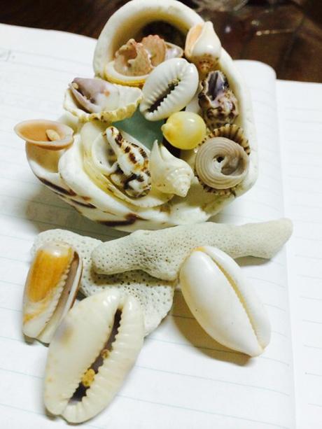 image_kaigara.jpg
